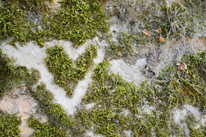 heart-grass